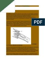 La Tiroides y el Hipotiroidismo.docx