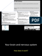 Presentation 1 How Your Brain and Nervous System Works