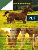 Rase de Cai Româneşti