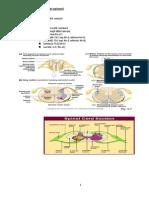 Patologia maduvei spinarii