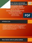 Biocombustible Del Aceite de Palma Africana