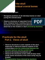 03Plactice for skull