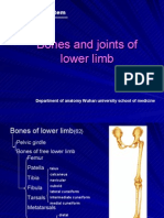 bones and joints of the lower limb.102