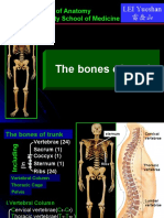 bones and joints of trunk