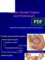 female genital organs and peritoneum