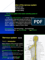 Introduction and spinal cord