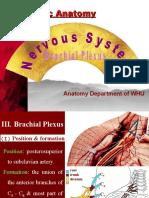 spinal nerves1
