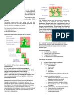 Placenta - Cardiovascular