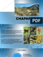 Chaparral Diapo