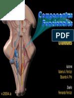 NEUROANATOMIAn-craneales-cf