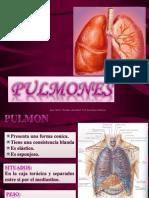 pulmones.pptx