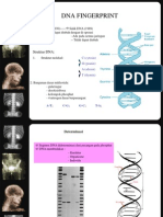 SIDIK DNA