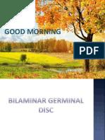 bilaminar germinal disc