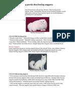 Perbedaan Kucing Persia Dan Kucing Anggora