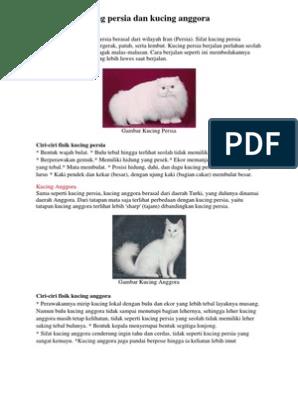 Unduh 64+  Gambar Perbedaan Kucing Persia Terlihat Keren