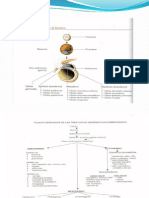 Clase de Embriologia