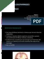 Nervio Vago && Glosofaringeo