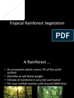 Rainforest Vegetation Structure and Adaptation