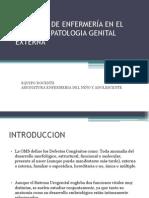 1Patología Genital Externa