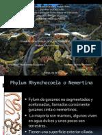 Nélida Martínez Post-laboratorio Sesión 2 Phylum Nemertea