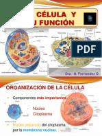 2.- La Célula y Su Función