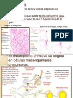 Adipocitos