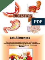 Digestion y Aparato Digestivo