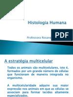 tecido_epitelial
