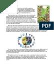 Lab 14 Ecology - Biodiversity - Indoor