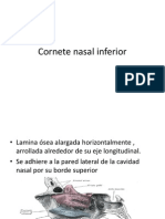 Copia de Cornete Nasal Inferior