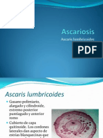 Ascariosis.ppt