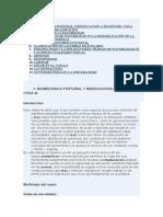 Biomecanica Postural