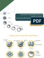 Desarrollo a Blasto Final Guayaquil