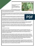 PLANTAS MEDICANALES