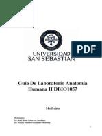 Laboratorio Anatomía Humana II