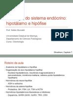 hipotalamo_hipofise
