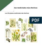 200 Plant as Medicinal Es