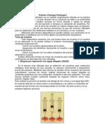 criterio de malignidad celular.docx