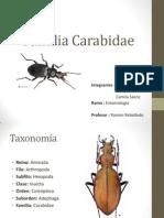 Familia Carabidae