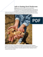 A Beginners Guide to Hunting Morel Mushrooms