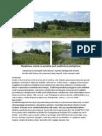 Wyjątkowa Ziemia Na Sprzedaż Pod Osadnictwo Ekologiczne