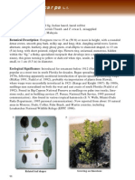 Ficus Microcarpa (Retusa)