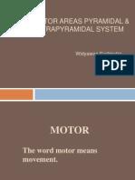 Motoric System