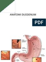Anatomi Duodenum