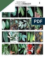 Youblisher.com-864177- 3 Plantas de Am Rica Tropical