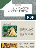 Hipotesis Zoo