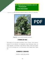 Oecopetalum Mexicanum
