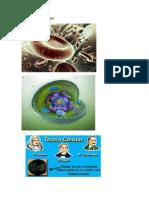 Teoria Celular de Biologia