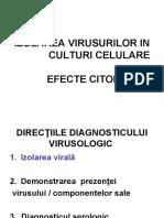 Culturi de Celule