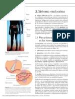 Sistema Endocrino 1